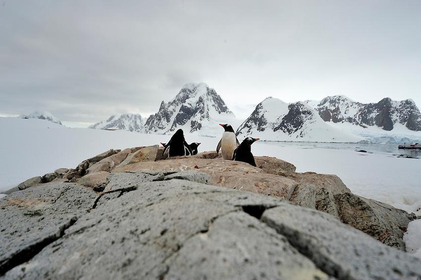 Rocky Refuge - Petermann Island