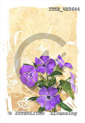 Isabella, FLOWERS, paintings,+flowers,++++,ITKE025644,#F# Blumen, flores, illustrations, pinturas ,everyday