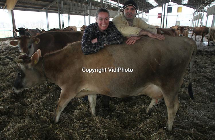 Foto: VidiPhoto..LUNTEREN - Irene en Jan Dirk van de Voort uit Lunteren tussen hun Jersey-koeien. Er zijn slechts twee bedrijven in Nederland die Jerseys met hoorns hebben. De familie Van de Voort heeft de Ekoland Innovatieprijs 2011 gewonnen voor onder andere het antibiotica-vrij werken.