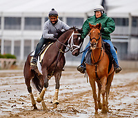 BALTIMORE, MD - MAY 12: Kentucky Derby winner Always Dreaming exercises in preparation for the Preakness Stakes next week at Pimlico Race Course on May 12, 2017 in Baltimore, Maryland.(Photo by Scott Serio/Eclipse Sportswire/Getty Images)