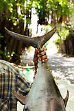 MAURITIUS, Regis selling yellowtail tuna on the roadside in the area of Souillac