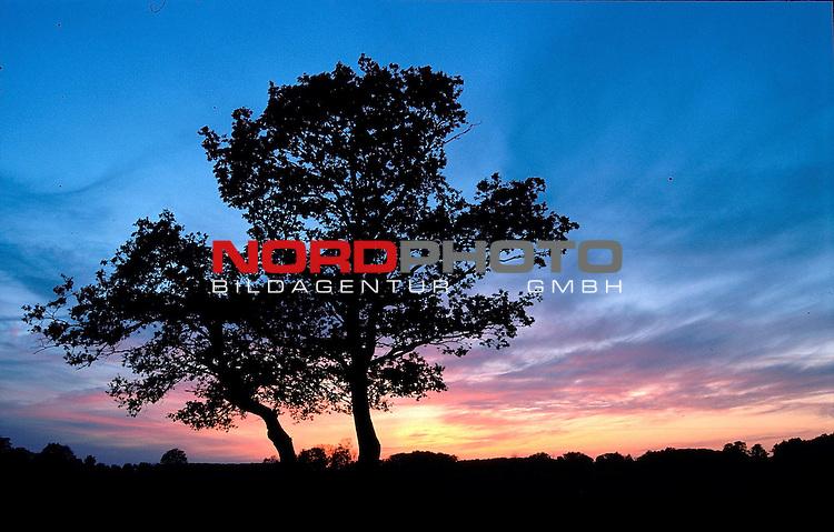 Baum vor Abendhimmel<br /> Bild-Info 20*30 bei 300 DPI ( Dia )<br /> [Foto &copy; nordphoto / Willi Rolfes -  Foto ist honorarpflichtig! zzgl. gesetzl. MwSt.<br />  Belegexemplar erforderlich<br /> Adresse: nordphoto<br /> Georg-Reinke-Strasse 1<br /> 49377 Vechta