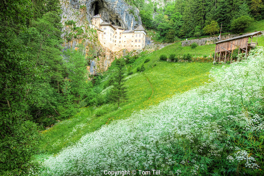 Predjama Castle, Slovenia, Gothic Reniassance castle built in limestone cave,  Summer wildflwoers, Originally built 1274