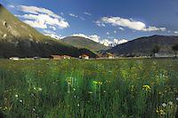 Farm buildings and meadow grass, Imst district, Tyrol/Tirol, Austria, Alps.