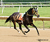 Erzulie Dancer running away at Delaware Park racetrack on 6/25/14