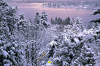 """A bright yellow """"Pedestrians Crossing"""" sign subcaptions an early winter morning scene. Taken in Bellevue by South Lake Sammamish, Washington State. Streaks of light result from taillights of a passing vehicle.....Photographed on digital media."""