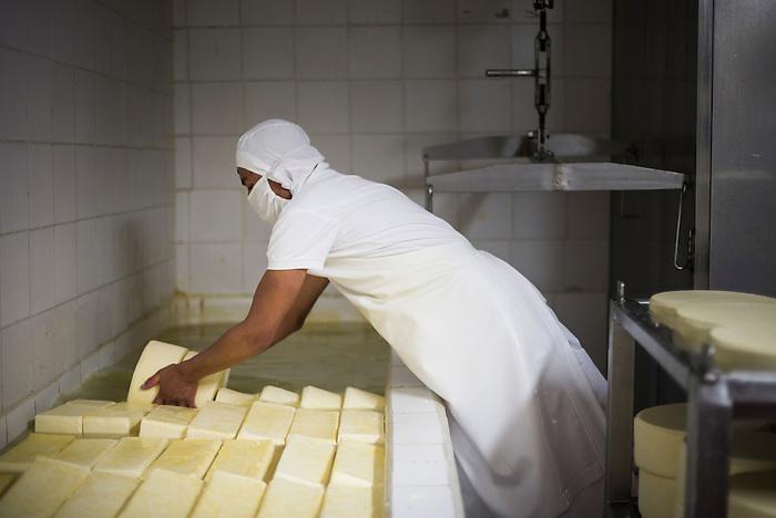 Cheese soaking in salt water at the Cheese Factory on the farm at Hacienda Zuleta, Imbabura, Ecuador, South America