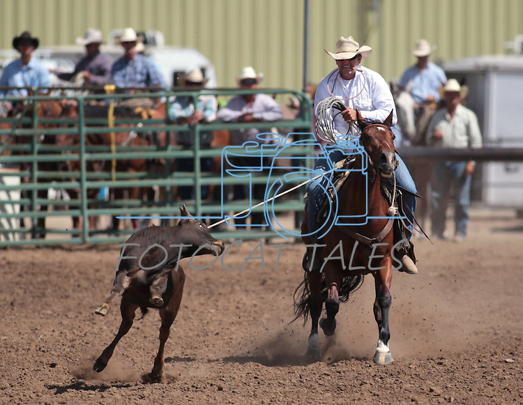 Daniel Veninracci competes in the calf roping event at the Minden Ranch Rodeo in Gardnerville, Nev., on Sunday, July 22, 2012..Photo by Cathleen Allison