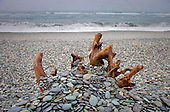 Old tree stump covered with pebbles on Gillespies Beach, Westland District, West Coast, South Island, New Zealand.