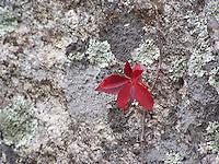 Native Plants And Animals And Invasive  Non-native Plants And Animals