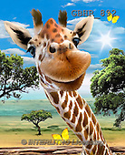 Howard, REALISTIC ANIMALS, REALISTISCHE TIERE, ANIMALES REALISTICOS, paintings,+giraffe,++++,GBHR892,#A#