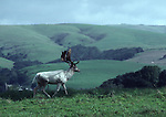 fallow deer buck at Point Reyes National Seashore