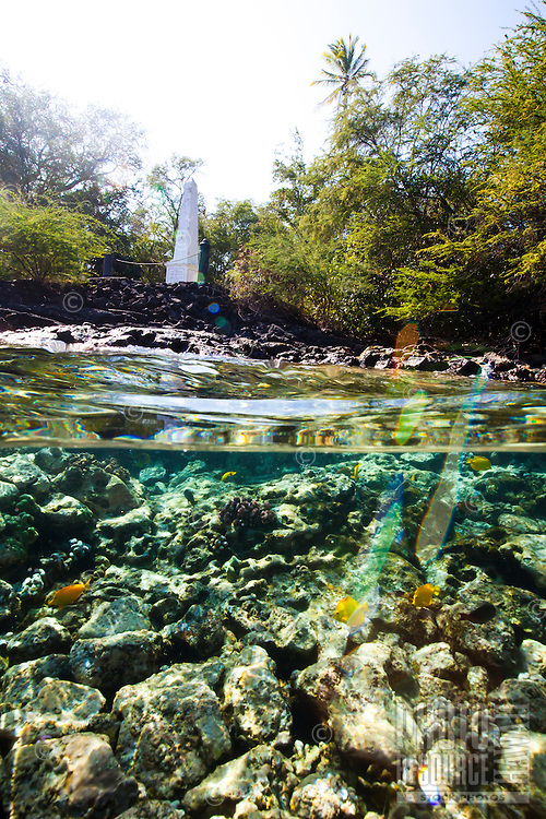 A snorkeler's view of the reef near the Captain Cook Monument, Kealakekua Bay, Big Island