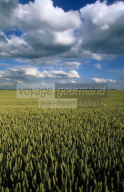 Europe/France/Ile-de-France/77/Seine-et-Marne/Env Chevru: Paysage agricole de la Brie