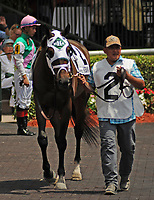 HALLANDALE BEACH, FL - APRIL 01: Summersault, trained by Mark Hennig, heads in for the Orchid Grade III Stakes on Florida Derby Day at Gulfstream Park on April 01, 2017 in Hallandale Beach, Florida. (Photo by Carson Dennis/Eclipse Sportswire/Getty Images)