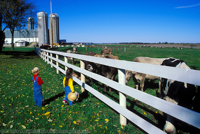 Children get a close look at Holstein dairy cows in Brodhead Wisconsin