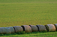 A row of hay bales forms a temporary pasture border in Southeastern Minnesota, Fillmore County.