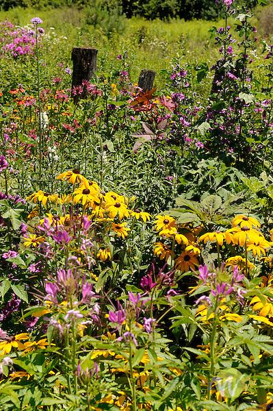 Perennial garden in July.
