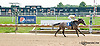 Tensas Carlos winning at Delaware Park on 8/21/13