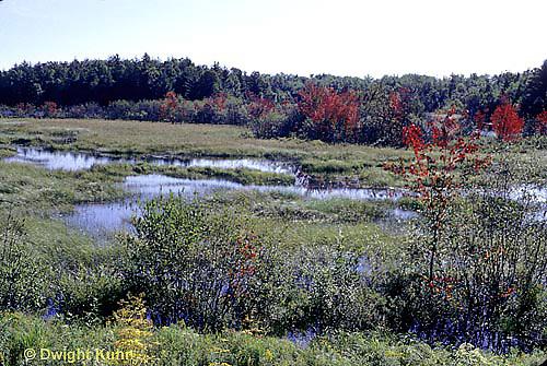 AU10-002z  Marsh