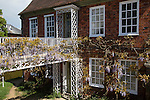 Wisteria plant in flower in garden of historic private home, Hungerford, Berkshire, England, UK
