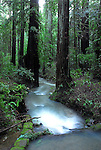 Creek in Armstrong Redwoods