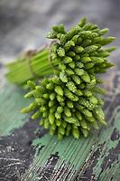 """Gastronomie Génréale / Diététique: Ornithogalum pyrenaicum, Ornithogale des Pyrénées, <br /> FamilleAsparagaceae<br /> L'Ornithogale des Pyrénées , appelé aussi Asperge des bois ou encore Aspergette  est une plante herbacée vivace de la famille des Liliacées selon la classification classique ou des Asparagacées selon la classification phylogénétique. Les jeunes pousses sont comestibles d'où les noms « asperge des bois » ou « aspergette » qui lui sont donnés dans certaines régions.  // General / Diet Gastronomy: Ornithogalum pyrenaicum, Ornithogale des Pyrénées,<br /> Family Asparagaceae<br /> The Ornithogale of the Pyrenees, also called Wood Asparagus or Aspergette is a perennial herbaceous plant of the Liliaceae family according to the classic classification or Asparagaceae according to the phylogenetic classification. The young shoots are edible, hence the names """"asparagus des bois"""" or """"aspergette"""" which are given to it in certain regions."""