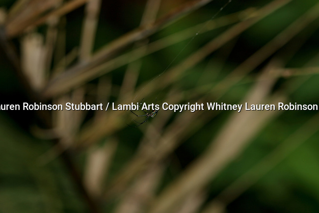 2007 Copyright  Whitney Lauren Robinson Stubbart / Lambi Arts Photography Earthly Companions Insects