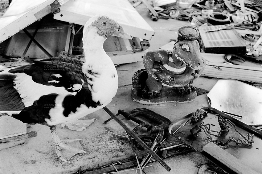 USA. Louisiana. Slidell. Aftermath of hurricane Katrina. Marina area near the lake Pontchartrain is virtually destroyed . Most houses were  destroyed by the storm, the tidal surge (water wave) and the floods. The area is now empty and all its inhabitants have left away. A duck stands close to a fake aligator in the ruins of a house. Household waste. Destruction of the urban american way of life. © 2005 Didier Ruef