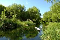 Lowland Chalk Stream, southern England