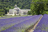 Tom Mackie, LANDSCAPES, LANDSCHAFTEN, PAISAJES, photos,+Field of Lavender & Senanque Abbey, Alpes de Haute, Provence, France,abbey, agricultural, agriculture, Alpes de Haute, bloom,+blooming, blossom, blossoms, crop, crops, cultivate, cultivated, cultivating, cultivation, design, digital, EU, Europa, Euro+pe, European, expansive, field, fields, flower, flowers, fragrant, France, french, Gordes, graphic, herbs, holiday destinatio+n, horizontal, horizontally, horizontals, lavender, line, pattern, patterns, Provence, Senanque Abbey+,GBTM080161-1,#l#, EVERYDAY