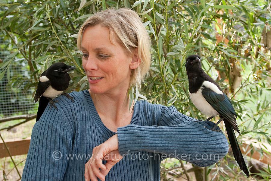 Elster, zutrauliches, an Menschen gewöhntes Tier auf der Schulter einer Frau, Pica pica, Magpie, Pie bavarde