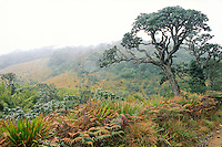 Misty morning at Horton Plains National Park