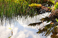 Late afternoon refections of sky and surrounding foliage in a canal at Wakodahatchee Wetlands, Delray Beach, Florida.