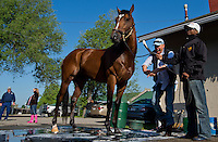 Goldencents, trained by Doug O'Neill, gets a bath after morning workouts for the Kentucky Derby at Churchill Downs in Louisville, Kentucky on April 30, 2013.