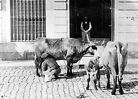 Dairy street vendor and his cows.,1890