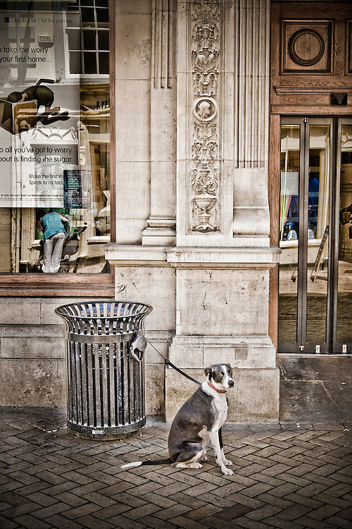 A dog sitting waiting for its owner