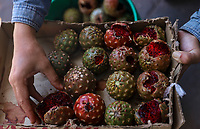 Stock Fruta