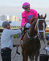 HALLANDALE BEACH, FL - JANUARY 28:  #1 Taghleeb with jockey Tyler Gaffalione heads to the winners circle after his win of the McKnight Stakes on Pegasus World Cup Invitational Day at Gulfstream Park on January 28, 2017 in Hallandale Beach, Florida. (Photo by Liz Lamont/Eclipse Sportswire/Getty Images)