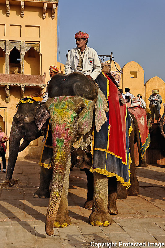 Elephant and driver at Amber Fort, Jaipur, India