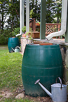 Rain barrel by gutter drain pipes for water storage, rainwater capture in Virginia garden