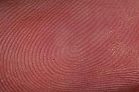 Fingerabdruck, Fingerabdrücke, Finger, Haut, Papillarlinien