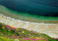 Wildflowers and waves. Man-o-War Beach Near durdle Door. Dorset Coast, England.