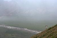 Dall sheep on the ridges of Polychrome pass in Denali National Park, Alaska
