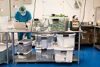 Workers are seen in the packaging department at the production and packaging facility for Garden Remedies, a medical cannabis producer, in Fitchburg, Massachusetts, USA, on Fri., Feb. 22, 2019.
