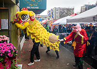 Dragon Dance, Mak Fai Kung Fu Lion Dance Team, Chinese New Year Celebration, Chinatown, Seattle, WA, USA.