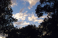 """A """"Corot"""" sky with dark, silhouetted trees."""