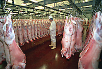 Government appointed meat hygiene service meat inspector at work in an abattoir checking the temperature of a carcase in the chiller room. This image may only be used to portray the subject in a positive manner..©shoutpictures.com..john@shoutpictures.com