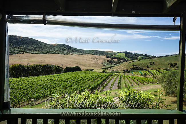 It is well worth visiting the vineyard restaurants on Waiheke Island. (Photo by Travel Photographer Matt Considine)