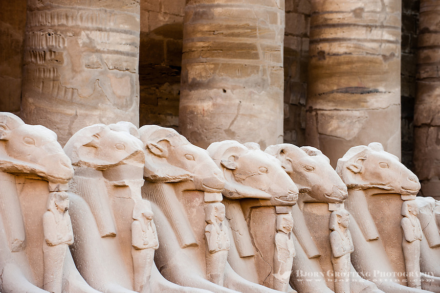 Egypt, Luxor. The Karnak Temple Complex in Luxor is dedicated to the god Amun, and is one of the most important in Egypt. Ram statues.